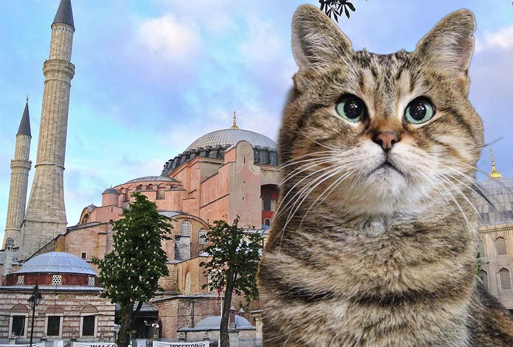 В Турции умерла знаменитая кошка Гли из собора Святой Софии фото