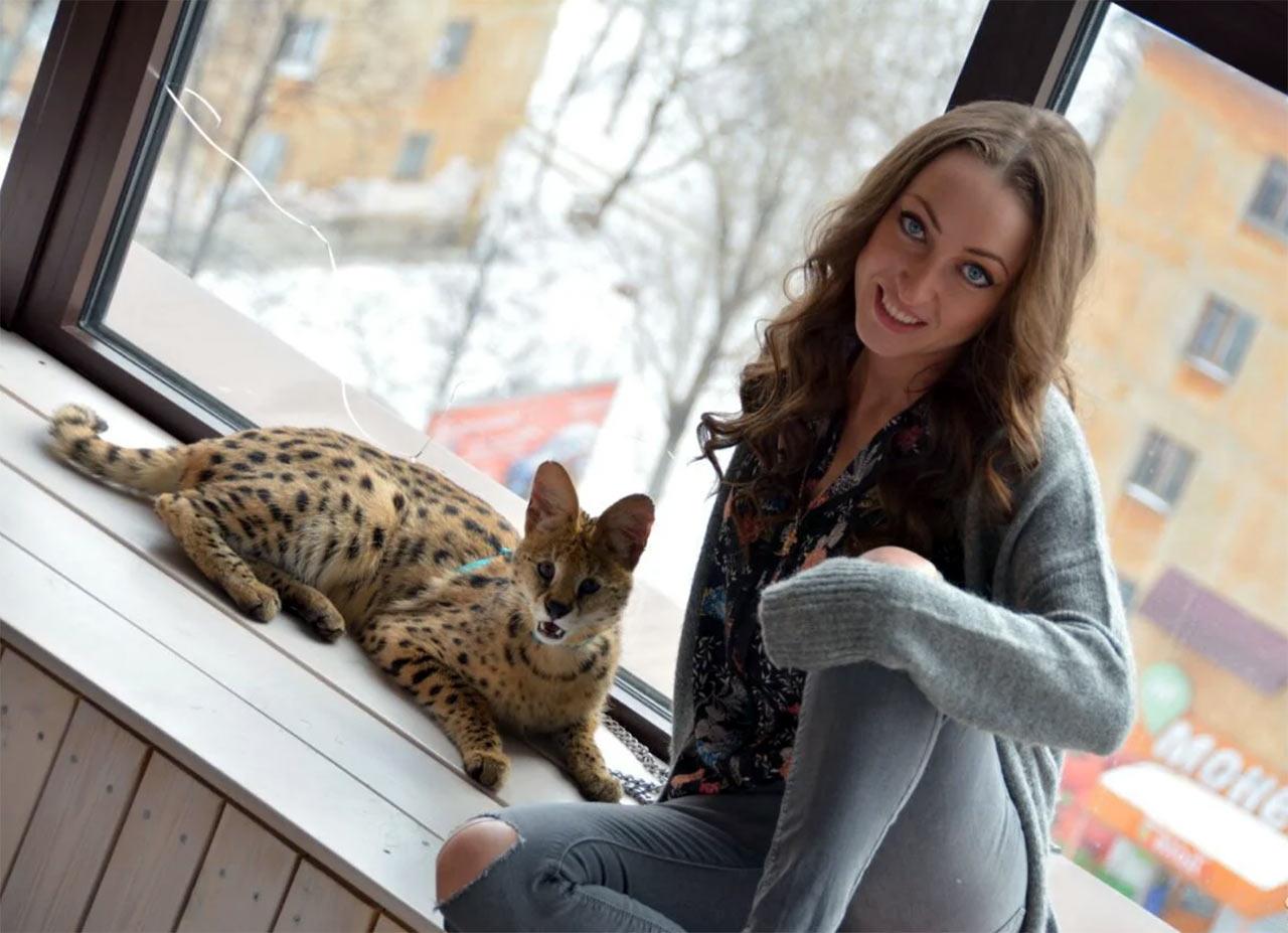 В Челябинске показали кошку стоимостью около пяти тысяч долларов фото
