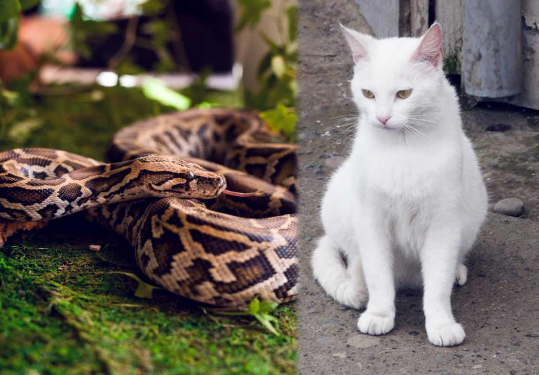 Прохожие спасли бездомную кошку из объятий огромной змеи фото