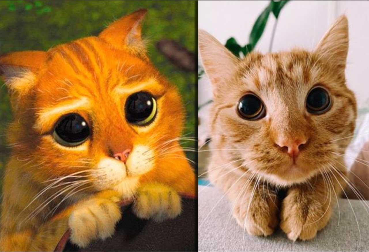 В Сети нашли реальную копию «Кота в сапогах» фото