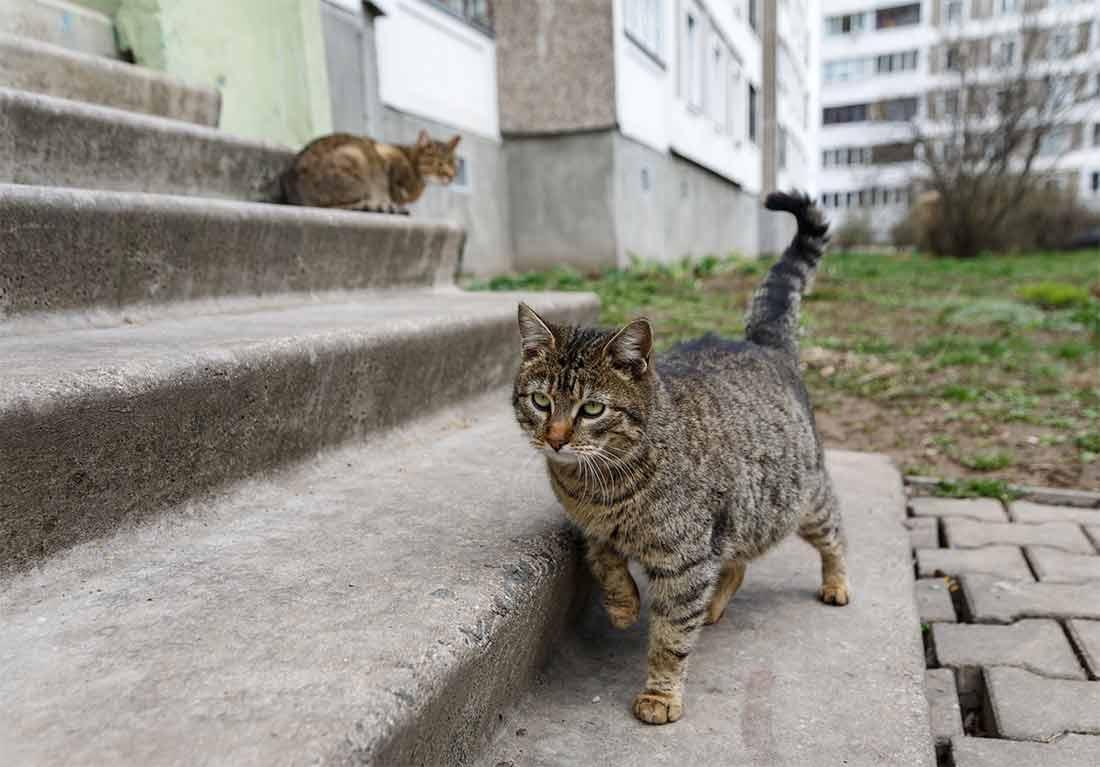 Два государственных приюта для бездомных кошек создадут в Санкт-Петербурге фото