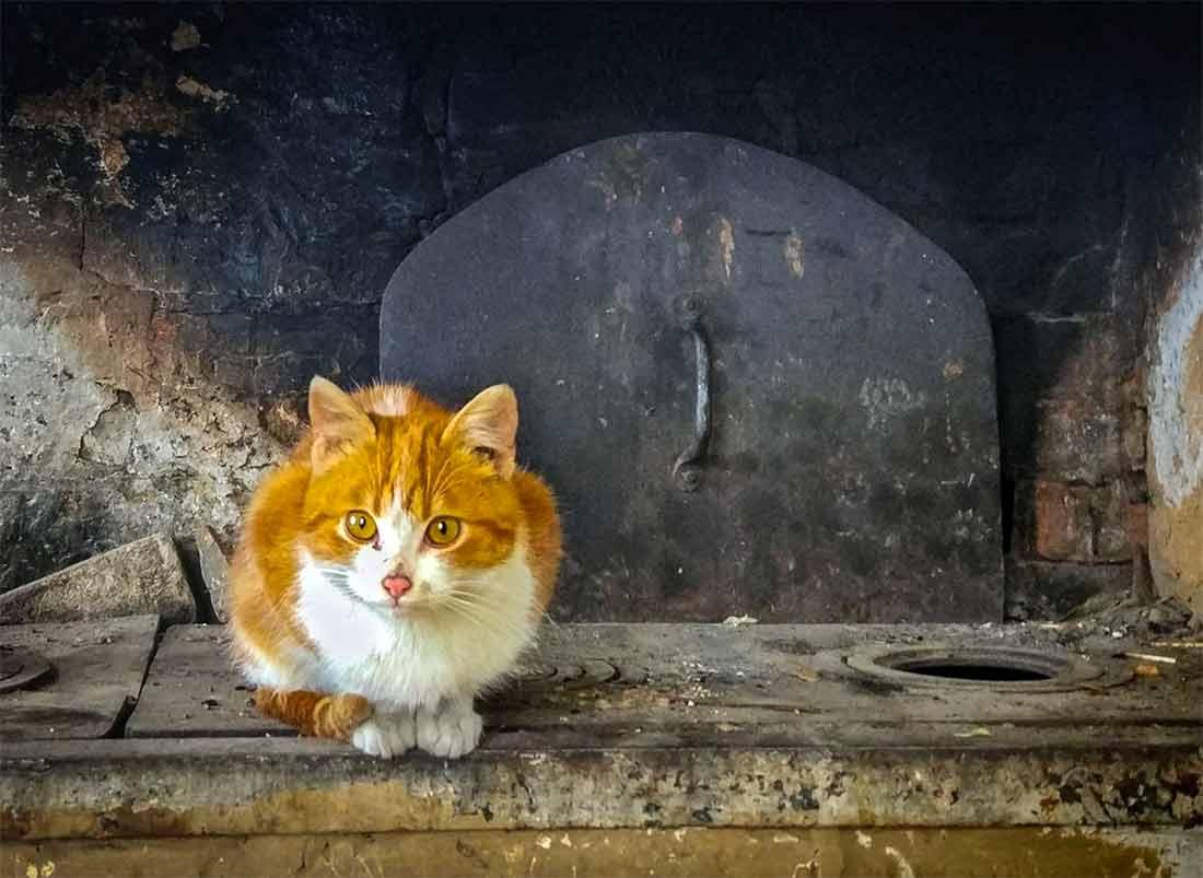 Вот почему 26 января наши предки уделяли внимание кошкам фото