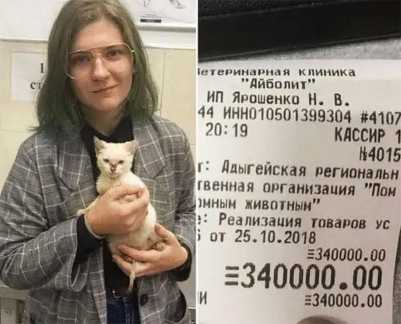 Чтобы отдать в приют котёнка, студентка из Адыгеи оплатила долг этого заведения в 340 тысяч фото