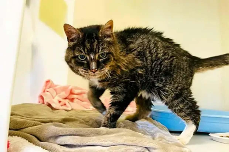 Пропавшая 20 лет назад кошка вернулась перед смертью к хозяйке фото