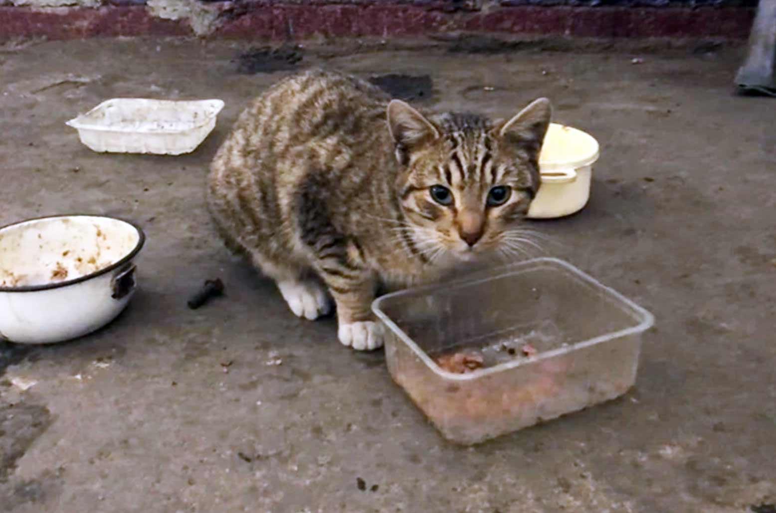 «Могут погибнуть под завалами»: сотрудники обанкротившегося завода в Петербурге пытаются пристроить десятки котов фото