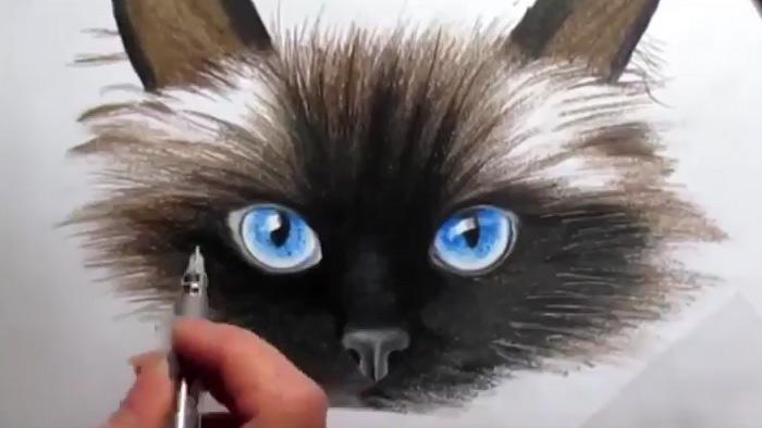 Видео: рисуем кошку поэтапно фото