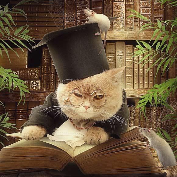 Итальянская сказка. Учёный кот фото