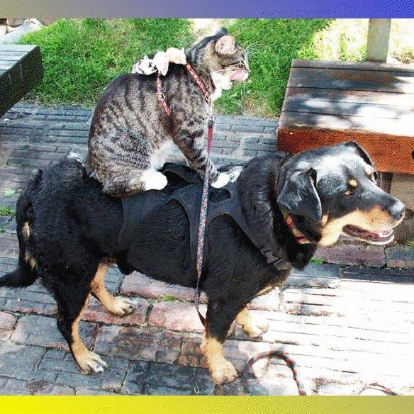 Монгольская сказка. Собака, кошка и мышь фото