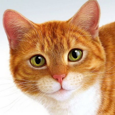 Кот (аудиосказка) фото