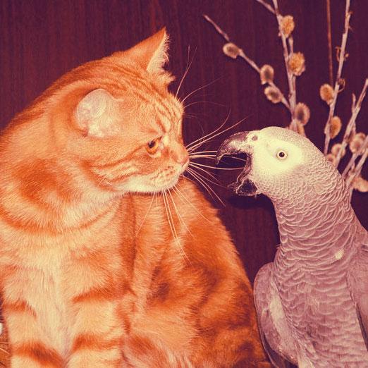 Кот и Попугай фото