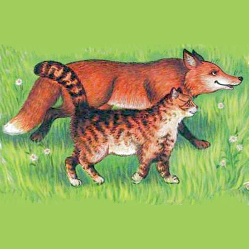 Братья Гримм — Лис и кошка фото