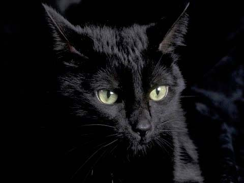 Я - настоящая черная кошка фото