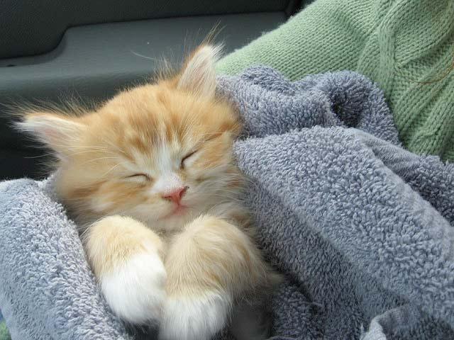 Котенок...Просто маленькая кошка.. фото
