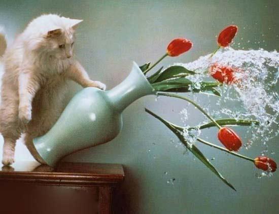 Дневник кота фото