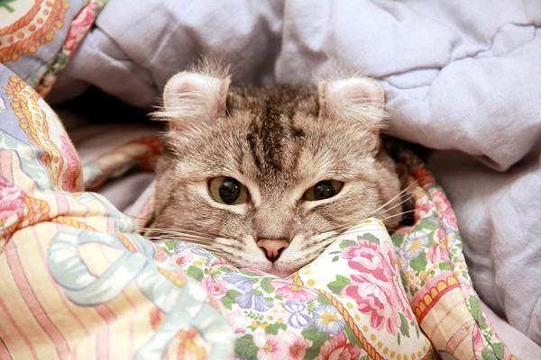На соседней подушке моя кошка лежит фото