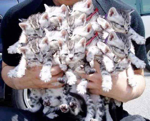 Ах, как много на свете кошек фото
