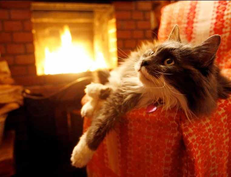 Кошка чудесно поет у огня фото