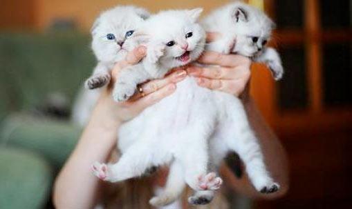 Букет котов фото