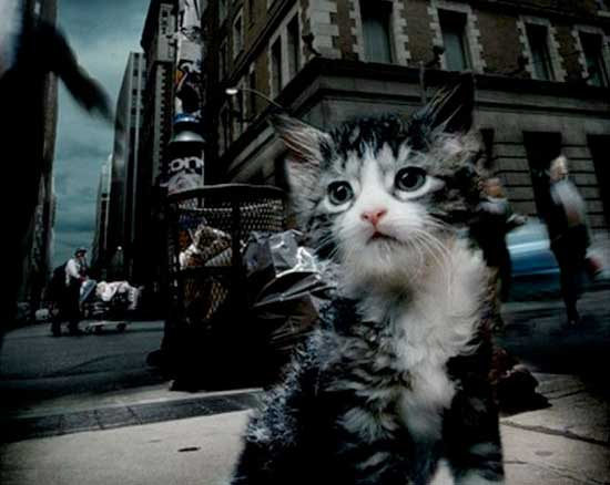 Исповедь бездомной кошки фото