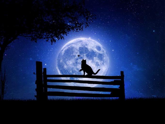 Коты. Лунная сказка фото