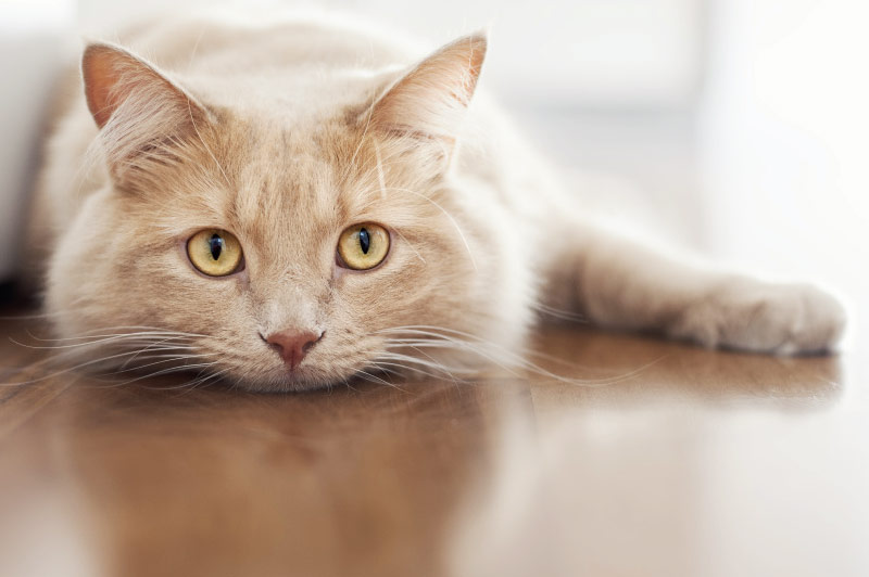 Бывают кошки разные фото
