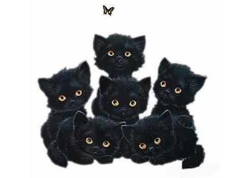 Шесть котят фото