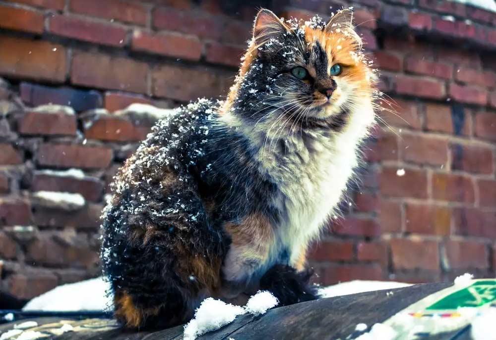 эта фото с бездомными кошками теории