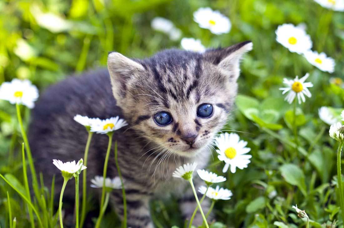 Котёнок и ромашка фото