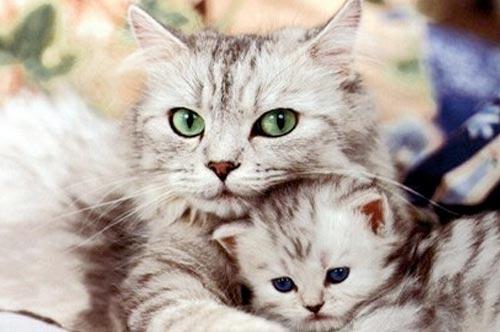 Личный опыт: роды нашей кошки фото