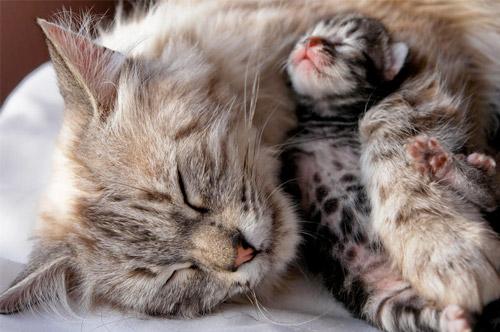 Роды у кошек фото