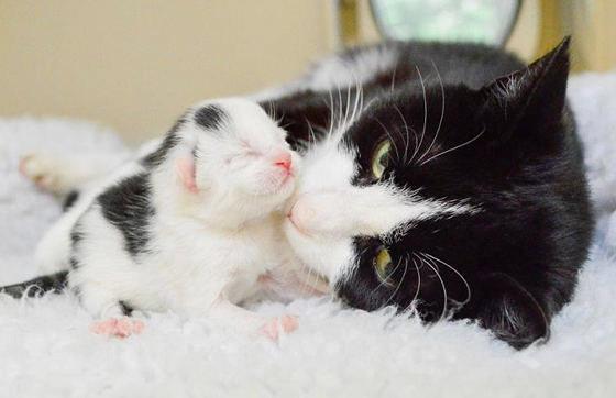 Как часто можно рожать кошке фото