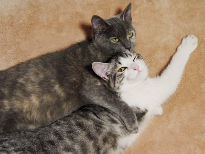 Продолжение рода кошки фото