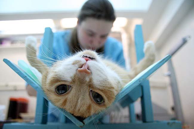 Стерилизация кошки фото