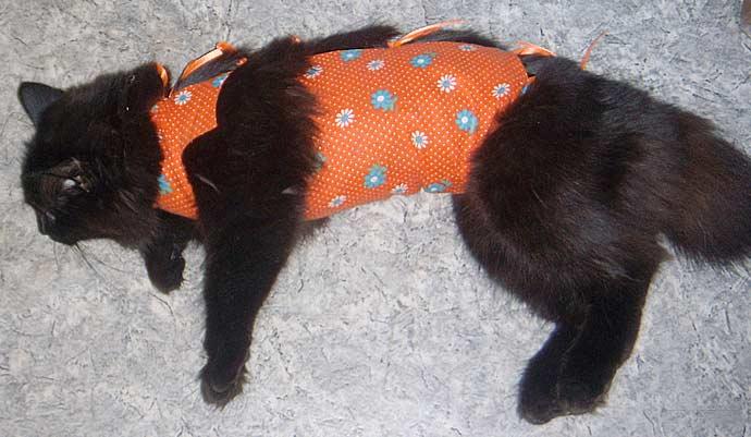 Стоит ли стерилизовать кошку фото