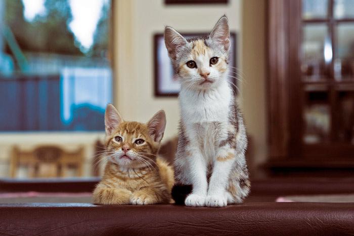 Этапы развития котят по неделям фото