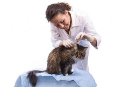 Как почистить уши и глаза кошке фото