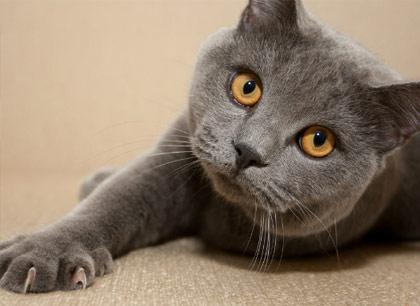 Как кошке подстричь когти фото