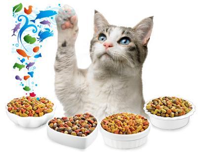 Витамины для кошек фото