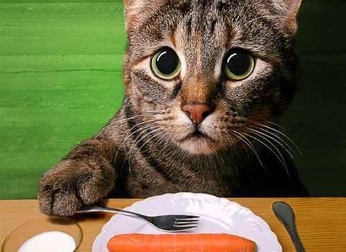 Чем кормить кастрированного кота фото