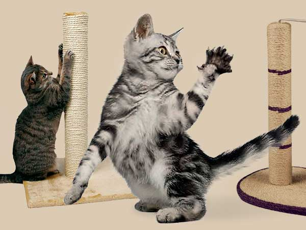 Как приучить кошку к когтеточке фото