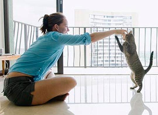 Как дрессировать кошку фото