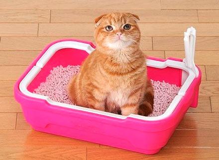 Как выбрать наполнитель для кошачьего туалета фото