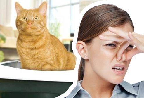 Как избавиться от запаха кошачьей мочи фото