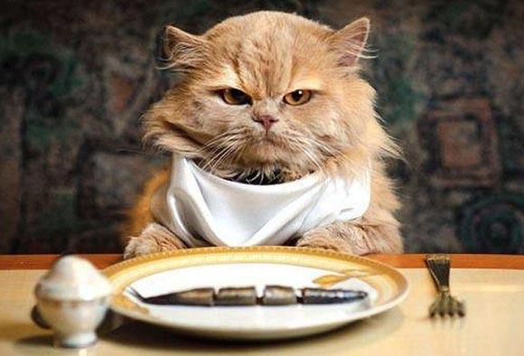 Как кормить стерилизованного кота фото