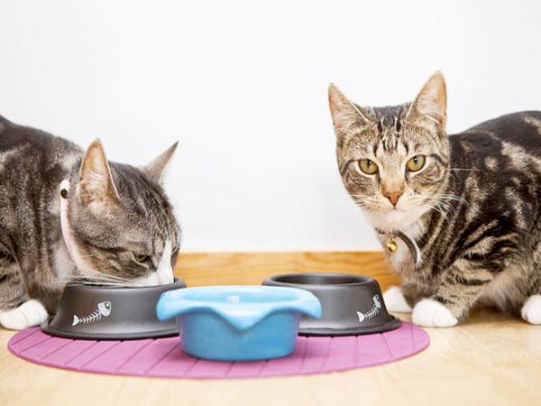 Что делать если кошка не ест несколько дней фото