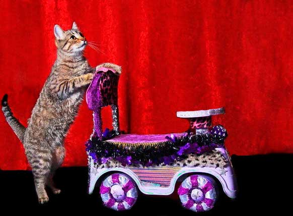 Дрессировка кошки в домашних условиях фото