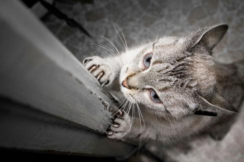 Как отучить кошку драть обои и мебель фото