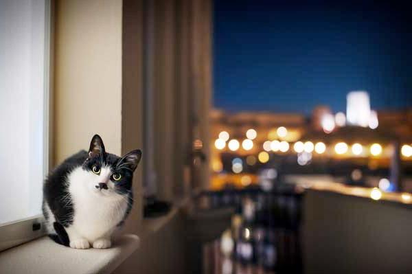 Что делать если кошка ночью не дает спать фото