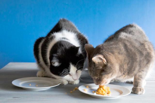 Кормление кошек натуральной пищей фото