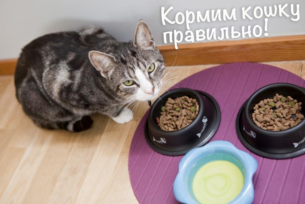 Как правильно кормить кошку фото